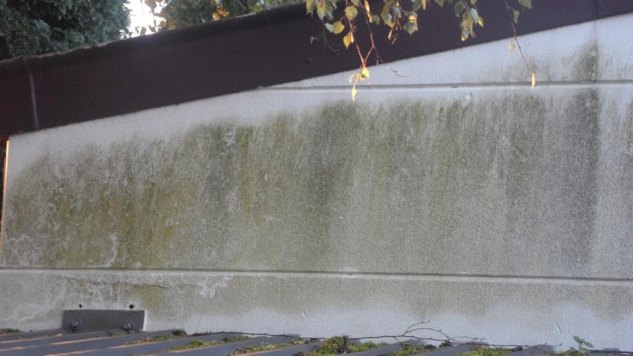 Algen entfernen cheap moos einfach entfernen with algen for Fadenalgen entfernen